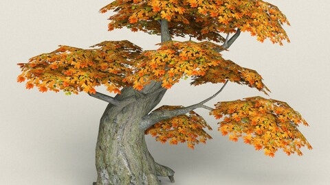 Low Poly Maple Tree 06