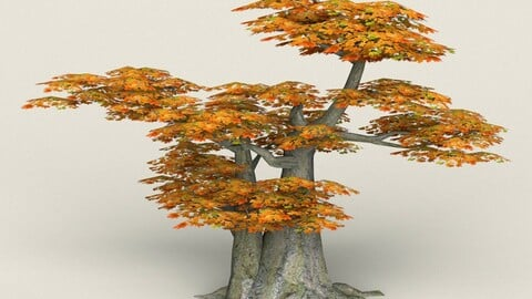 Low Poly Maple Tree 10