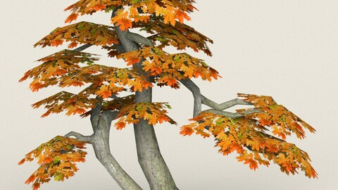 Low Poly Maple Tree 14