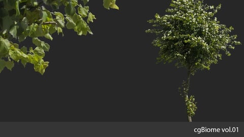 cgBiome vol.01 - Summer Trees