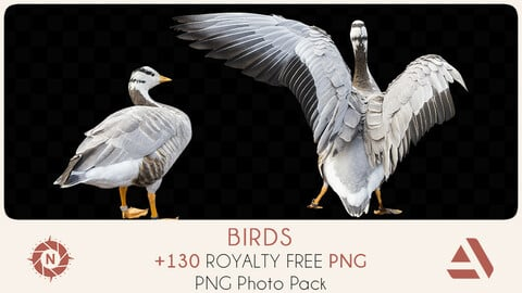 PNG Photo Pack: Birds