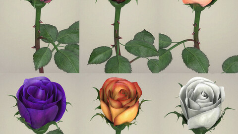 Rose Flower Collection