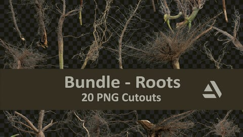 PNG Photo Pack: Roots