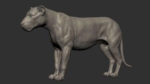 Free 3D lioness basemesh model (OBJ)
