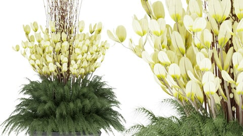 plant outdoor 001