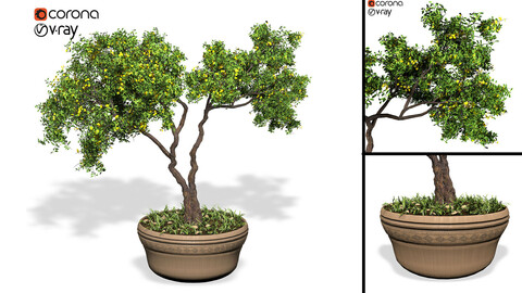 Decorative ornamental tree plant 01