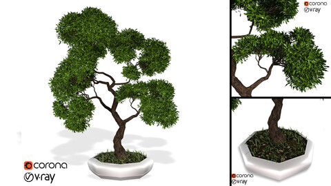 Decorative ornamental tree plant 02
