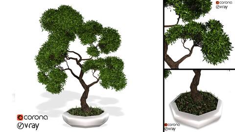 Decorative ornamental tree plant 02