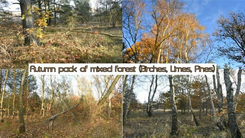 Autumn pack of mixed forest (Birches, Limes, Pines)