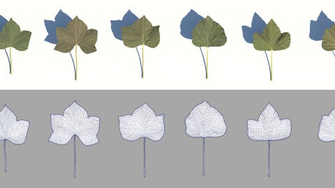 ivy leaves 3D model
