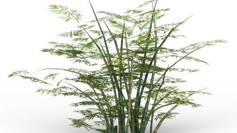 Bamboo Tree 02