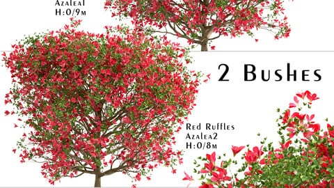 Set of Red Ruffle Azalea Bushes (Rhododendron) (2 Bushes)
