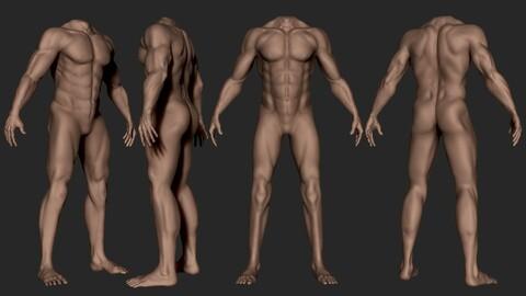 Male Body Anatomy HighPoly Base Model Vol2