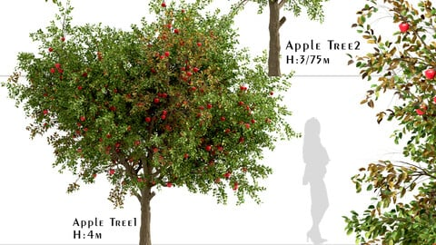 Set of Apple Trees (Malus domestica) (2 Trees)