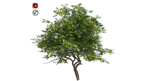 Lemon Fruit Tree