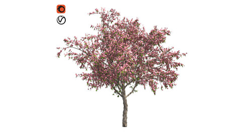 Peach Flowers Tree