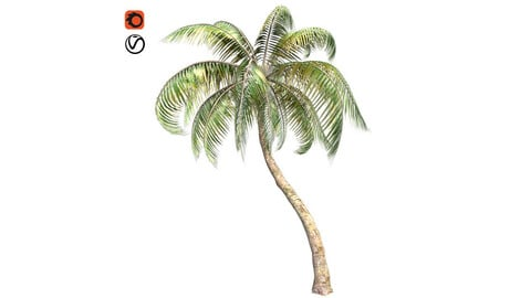 Palm coconut Tree