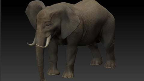 Elephant 3D Asset