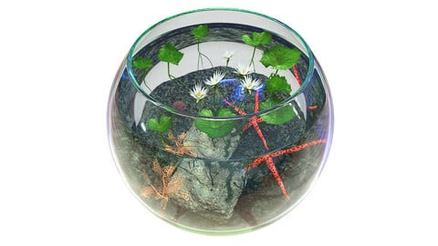 Aquarium Water Lily
