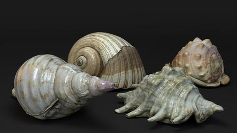 Seashells - 3D Scanned models