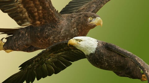 Eagles Pack v3 Unity