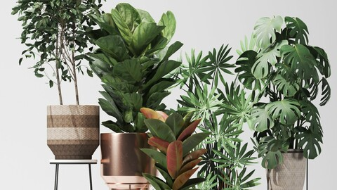 Plant collection02