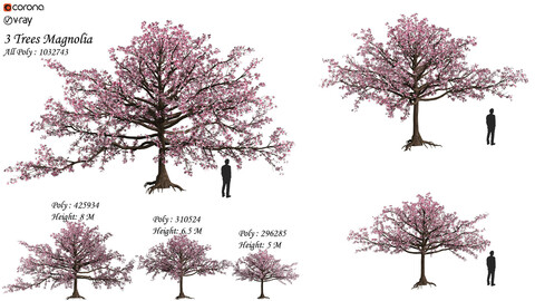 Set of magnolia tree