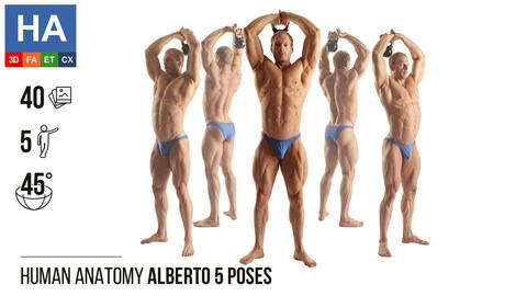 Human Anatomy | Alberto 5 Various Poses #1 | 40 Photos