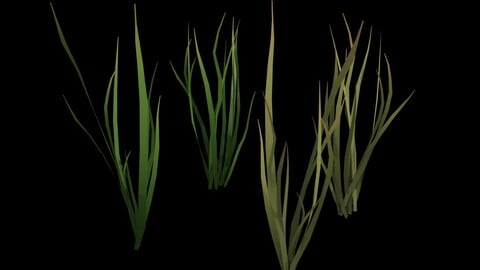 Grass Animated Dry and Fresh Low-poly 3D model
