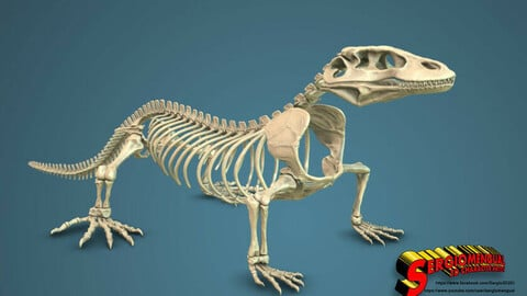 Komodo Dragon Skeleton 3D print model