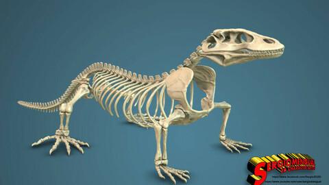 Komodo Dragon Skeleton 3D print model