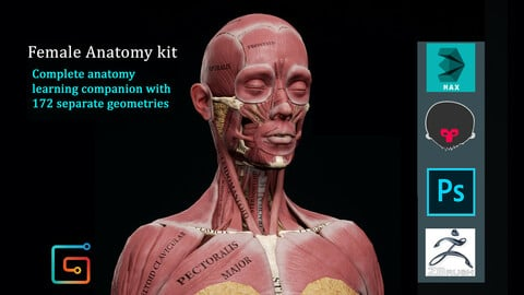 Female Anatomy Kit