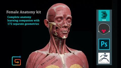 Female Anatomy Kit