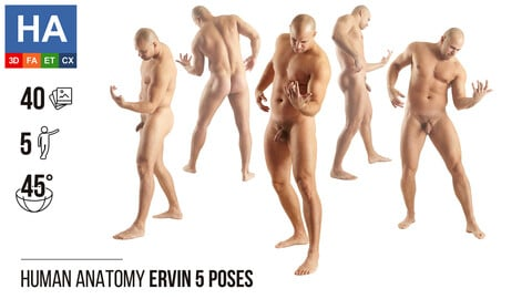 Human Anatomy   Ervin 5 Various Poses   40 Photos