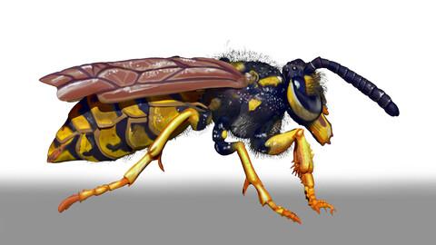 Wasp Character Sculpt