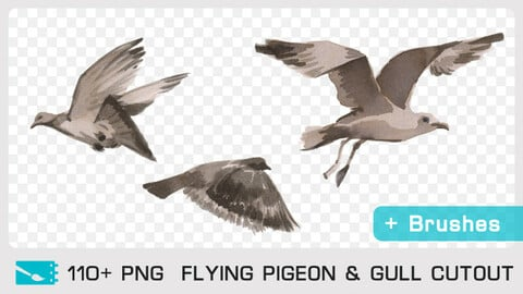 FLYING PIGEON & GULL CUTOUT - Traditional painting pack - 110 PNG & FREE Brushes + 1 bonus PSD