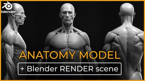 Anatomy male ecorche + RENDER SCENE
