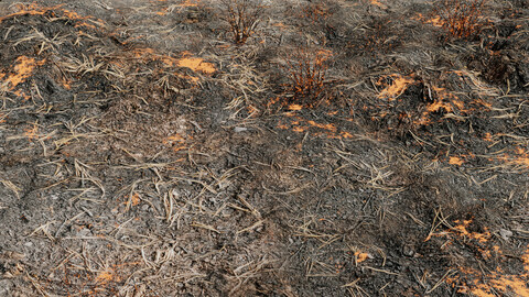 Burned Ground 3D modell