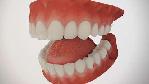 Realistic Teeth Mouth for character