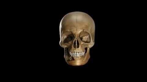 skull intro for video