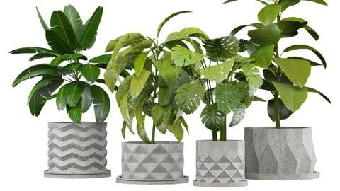 Set of Plants in Concerete Pots (4 Plants) (Set-001)