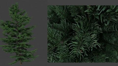 tree fir plant 3d model 3D model