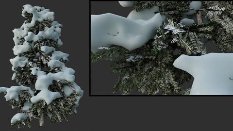 snow tree  spruce 3D model