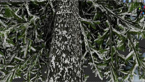 Tree_Picea-abies_winter