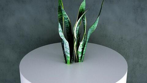 Grass / Groundcover (Sansevieria / Dracaena Trifasciata) [3d Scan Model: Plants / Grasses]