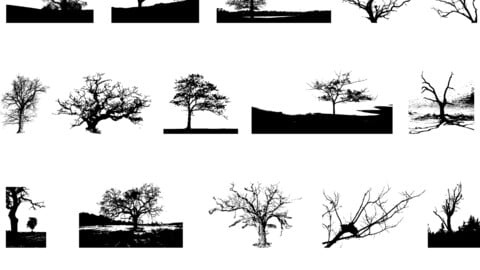 Free Trees Vector Package