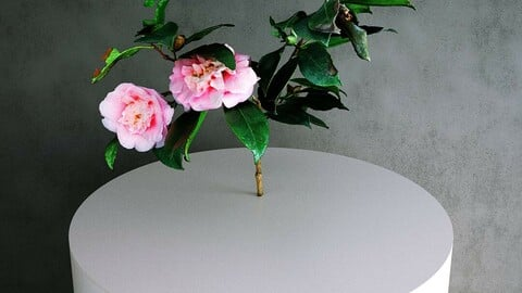 Camellia Japonica Twig 02 with Pink Flowers [3d Scan Model: Plants / Flowers]