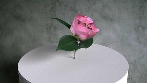 Camellia Japonica Twig 09 with Pink Flower [3d Scan Model: Plants / Flowers]