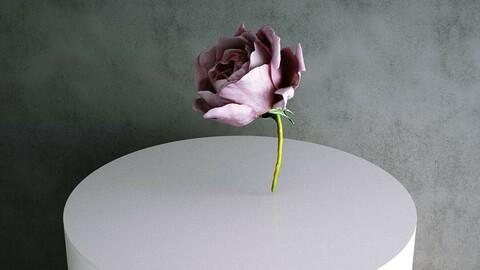 Rose / Rosa Hybrida 04 Pink [3d Scan Model: Plants / Flowers]