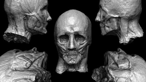 Skinless Head Models